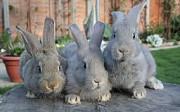 Домашняя крольчатина.