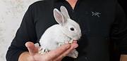 Карликовые кролики
