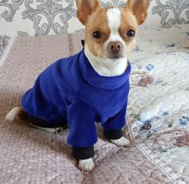 Кофточка синяя, утепленная для собак и кошек
